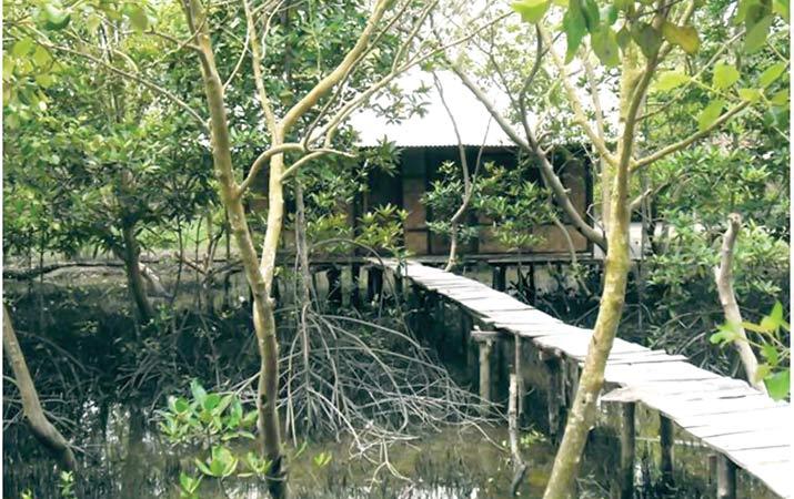Ekowisata Mangrove Kampoeng Nipah kab. Sergei | komunitastkj